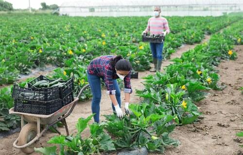 Agropecuária - Foto: Mapa