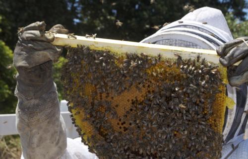 Já são nove polos instalados pelo País, atendendo apicultores da Bahia, Ceará, Espírito Santo, Minas Gerais, Pará, Piauí, Rio Grande do Norte e Rio Grande do Sul. Foto: Ministério do Desenvolvimento Regional