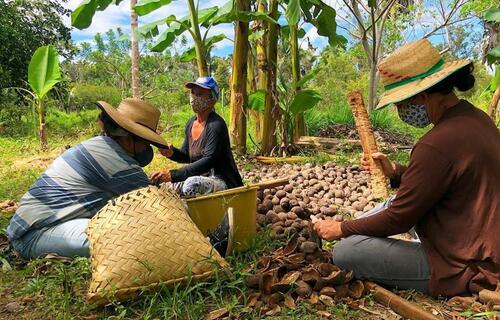 Quebradeiras de coco do estado. Foto: Arquivo/Governo do Maranhão