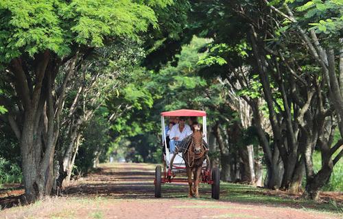 Foto: José Fernando Ogura/Governo do Paraná