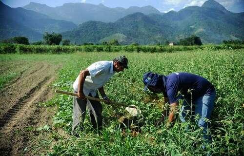 Agricultura familiar. Foto: Agência Brasil.