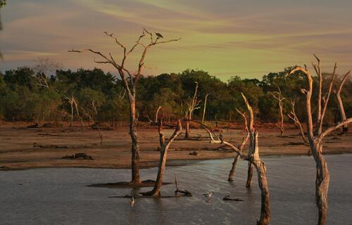 Imagem da seca acometendo um lago na região das dunas douradas. Foto: Ian Turnell (Pexels)