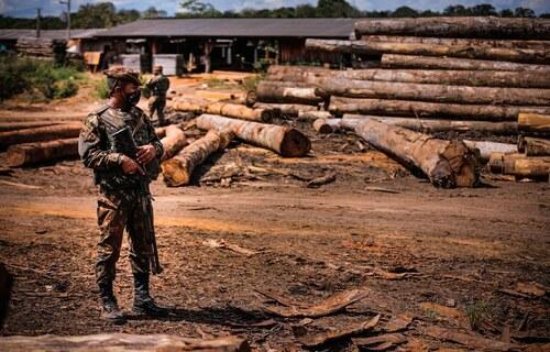 Apreensão de madeira - Foto: Ministério da Defesa