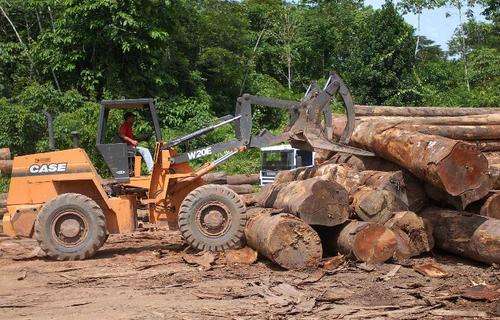 Desmatamento. Foto: Agência Brasil.