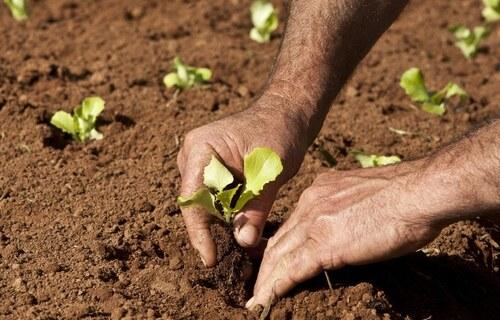 Agricultura Familiar - Foto: MAPA
