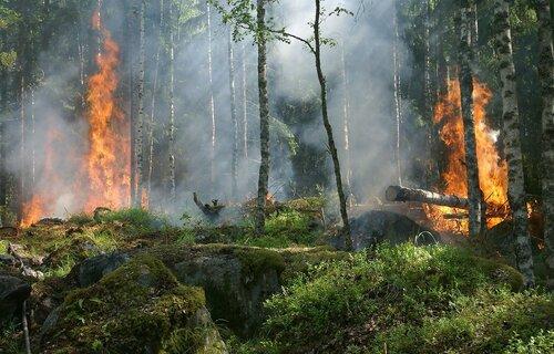Municípios foram atingidos por incêndios florestais. Foto: Ylvers/Pixabay