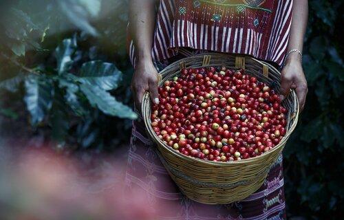 Café - Foto: Reynaldo Alvarez Cruz/Pixabay