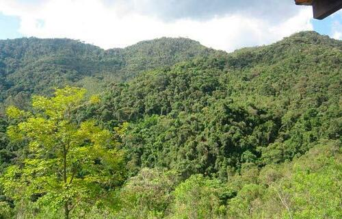 Área de preservação. Foto: Semad/Divulgação.