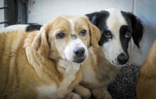 Cachorros - Foto: Geovana Albuquerque/Agência Saúde/GDF