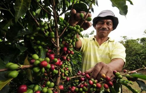Foto: Arquivo/EBC - Agricultor colhendo café